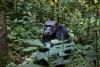 Travelling to Uganda for a Gorilla Safari