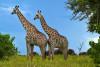 Safari por Zambia